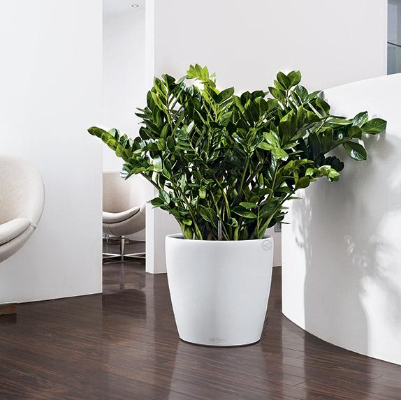 samozavla ovac kv tin e lechuza classico 43 b l. Black Bedroom Furniture Sets. Home Design Ideas