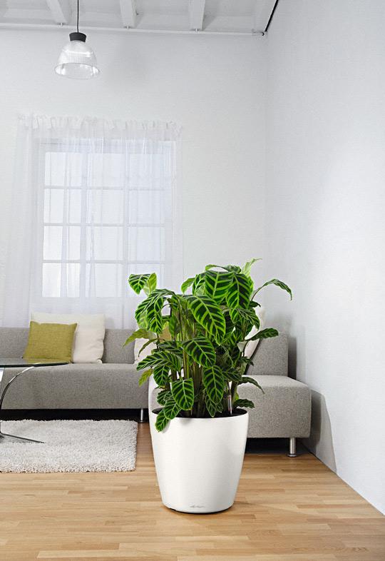samozavla ovac kv tin lechuza classico 60 b l. Black Bedroom Furniture Sets. Home Design Ideas