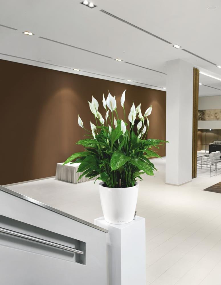samozavla ovac kv tin lechuza classico ls 43 b l. Black Bedroom Furniture Sets. Home Design Ideas