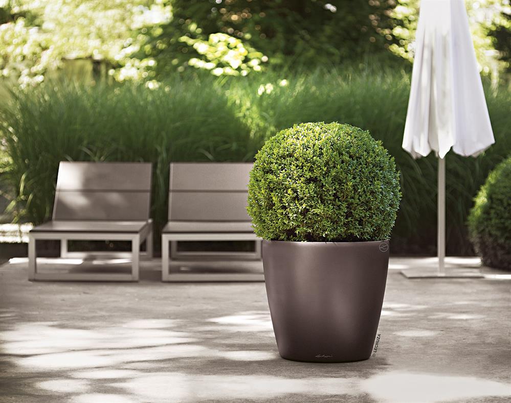 samozavla ovac kv tin e lechuza classico 28 espresso. Black Bedroom Furniture Sets. Home Design Ideas