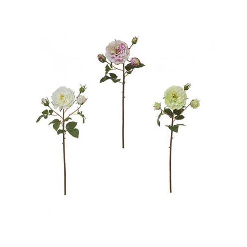 Květiny sia